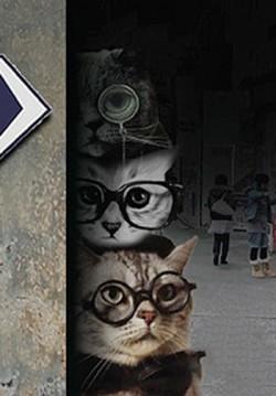 Yan Sokağın Akıllı Kedileri