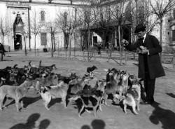 Dört Ayaklı Belediye : İstanbul'un Sokak Köpekleri