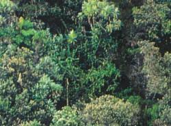 Geçici Yeşil Alan