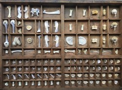 Paleontoloji Müzesi